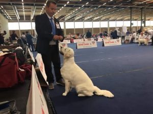 Stella Euro Dog Show 2019